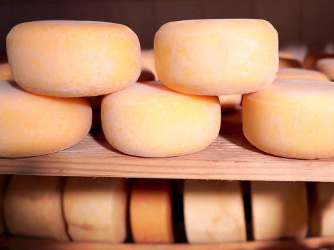 Carboidrato do soro do queijo aumenta imunidade a doenças